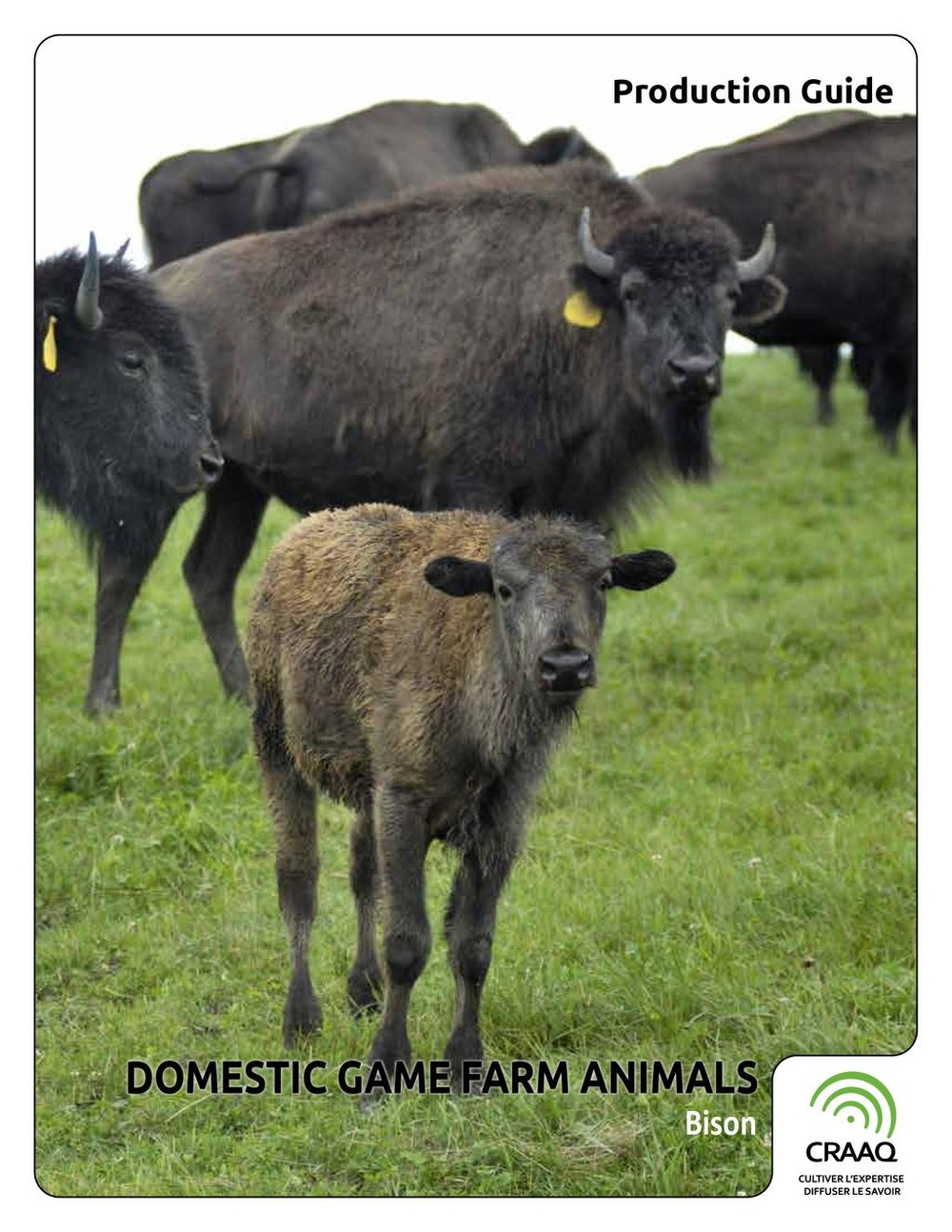 Domestic Game Farm Animals - Bison
