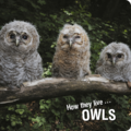 How they live... Owls