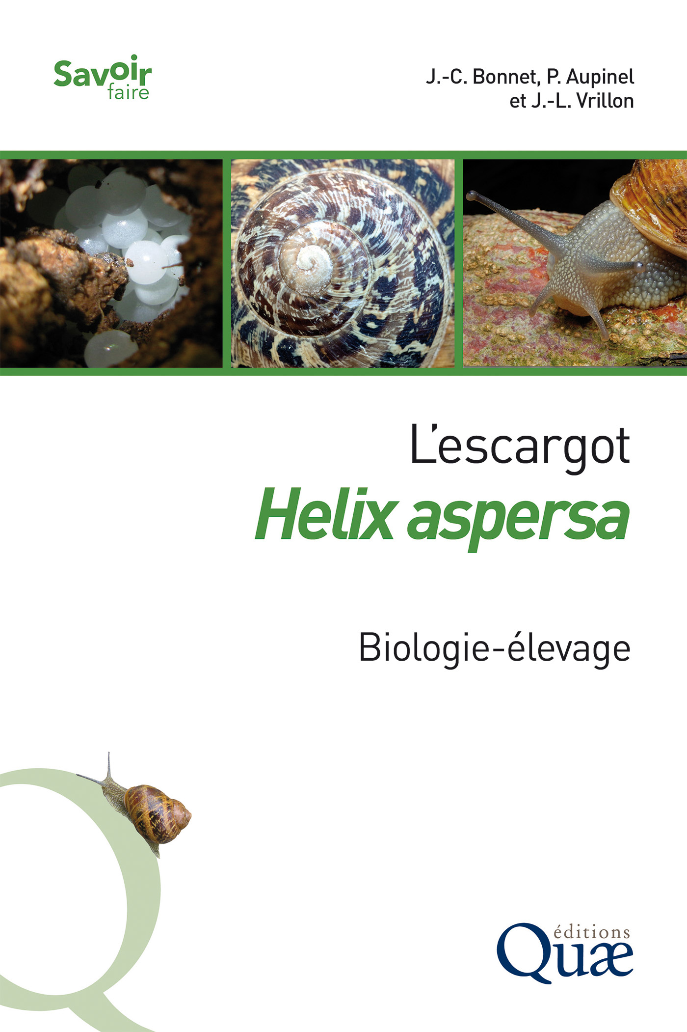 L'escargot Helix aspersa